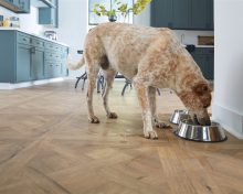 Pet-friendly design tips