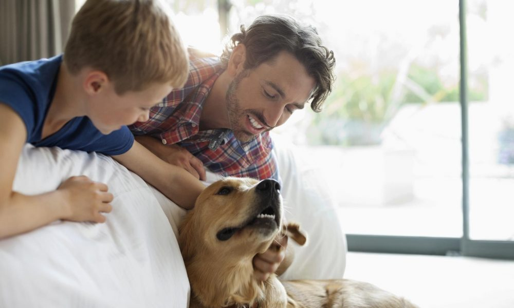 5 pet-friendly preparations for your summer travels
