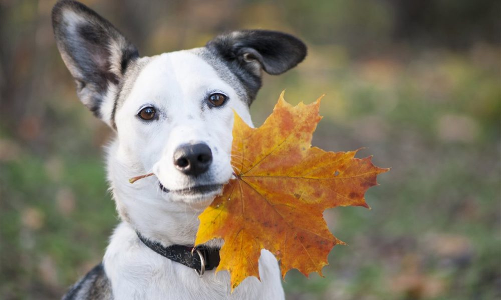 5 fall tips for protecting your pet's health