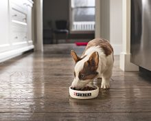 What All Puppy Owners Should Know About Feeding Their Puppies