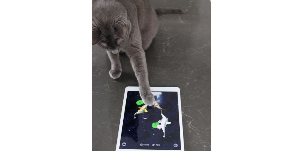 5 fun ways to keep your cat entertained at home