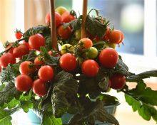 4 easy ideas to enhance your 2021 garden