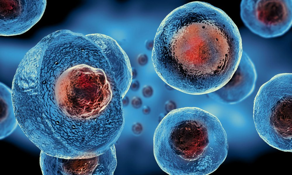 Dr. Savarino not all stem cells are created equal