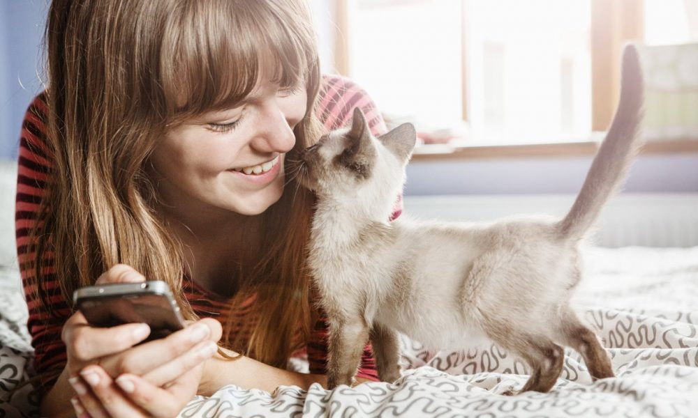 Adopting a new cat? 5 tips for new cat parents
