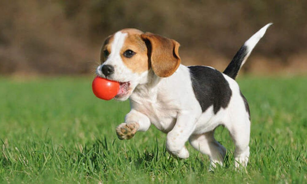 5 tips for keeping your dog more active