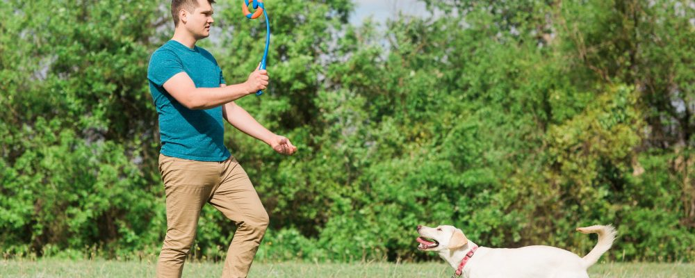 Tips to keep your pet healthy in the heat