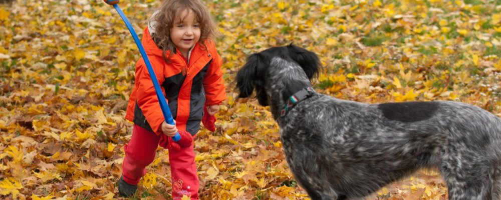 Tips to give your pet a happy, healthy fall