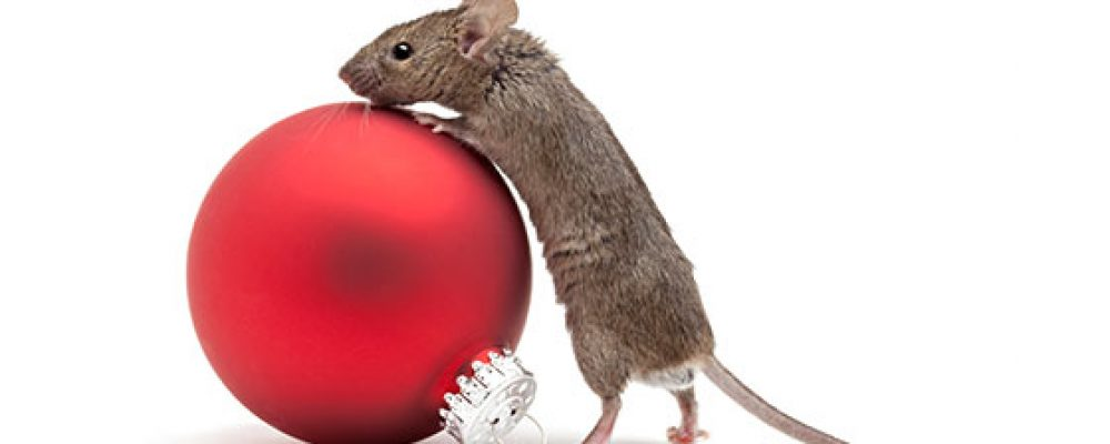 Prep your kitchen against holiday pests with these 5 tricks